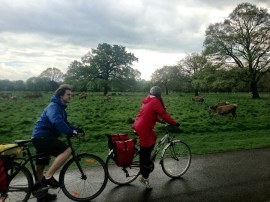 Deer in Hampton Court Park, tour 3