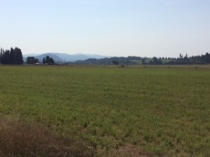 The Willamette Valley on a Sunday morning ride