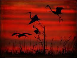 herons sunset