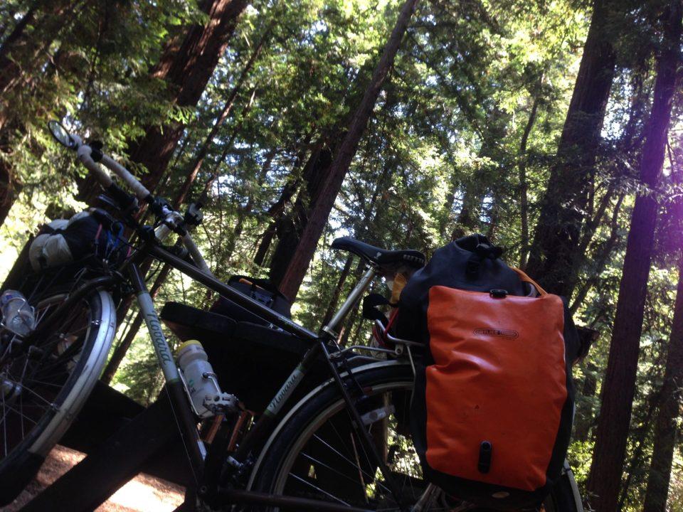 bike touring redwoods