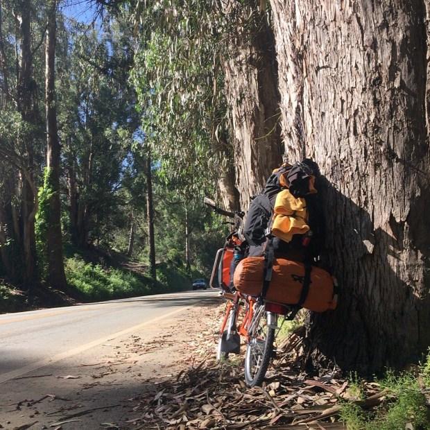 Brompton in eucalyptus grove
