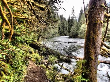 The tral opens up to the roaring McKenzie River too many times to count, but right now the river is almost at its peak flow.