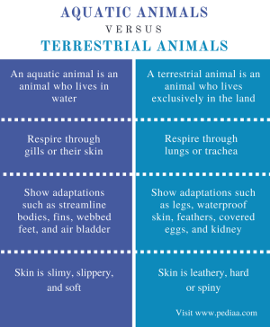 Difference Between Aquatic and Terrestrial Animals | Definition, Habitat, Adaptations, Features