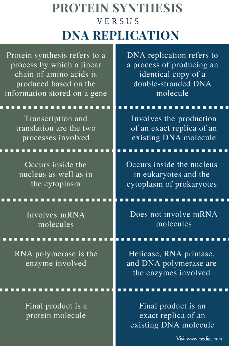 Process Rna Synthesis