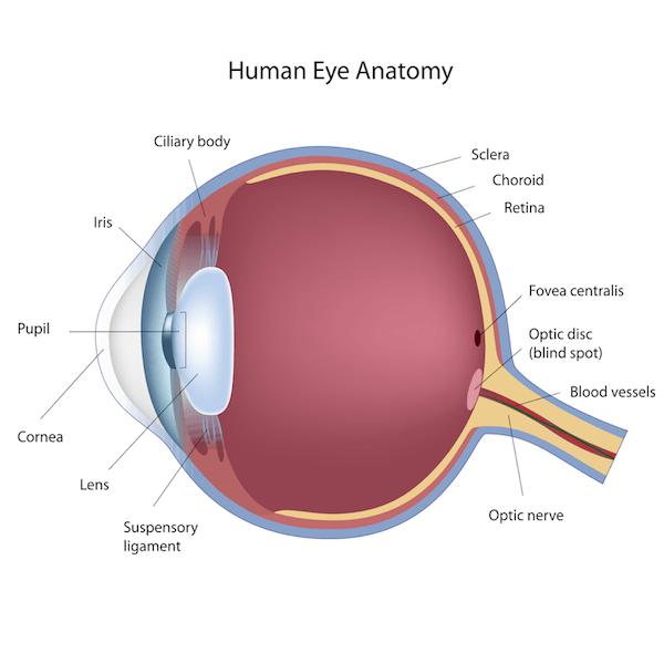 EYE LIBRARY - Pediatric Ophthalmology PA