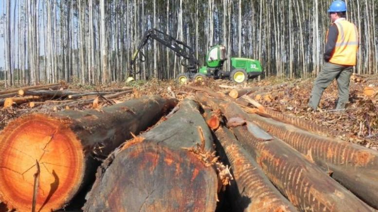Maderas del Orinoco dinamiza sector forestal - Maderas del Orinoco dinamiza sector forestal