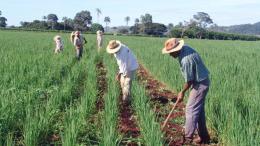Italianos dispuestos a invertir en sector agroalimentario venezolano - Italianos dispuestos a invertir en Sector Agroalimentario Venezolano