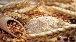 Presidente Maduro anuncia llegada de trigo ruso a Venezuela - Presidente Maduro anuncia llegada de trigo ruso a Venezuela