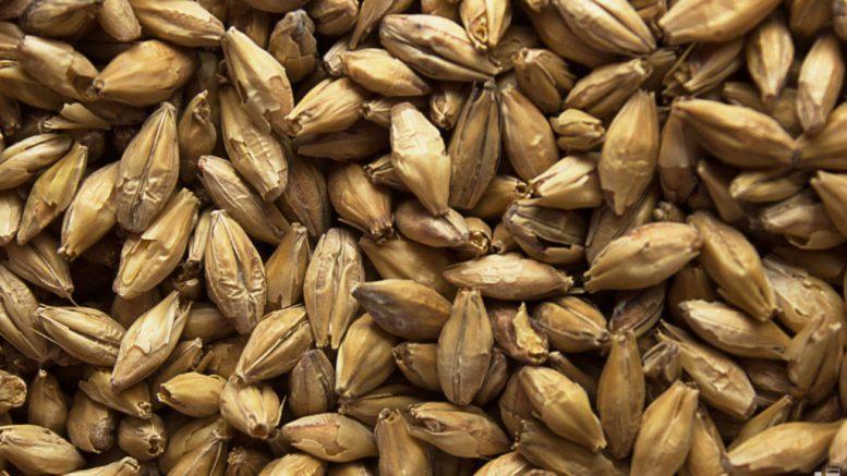 6 mil 900 toneladas de cebada malteada llegaron a Maracaibo - 6 mil 900 toneladas de cebada malteada llegaron a Maracaibo