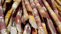 Crearán plan especial para incrementar producción de Azúcar - Crearán plan especial para incrementar producción de Azúcar