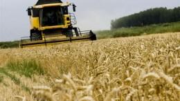 Rusia exportará entre 50 y 52 millones de toneladas de cereales este año agrícola - Rusia exportará entre 50 y 52 millones de toneladas de cereales este año agrícola