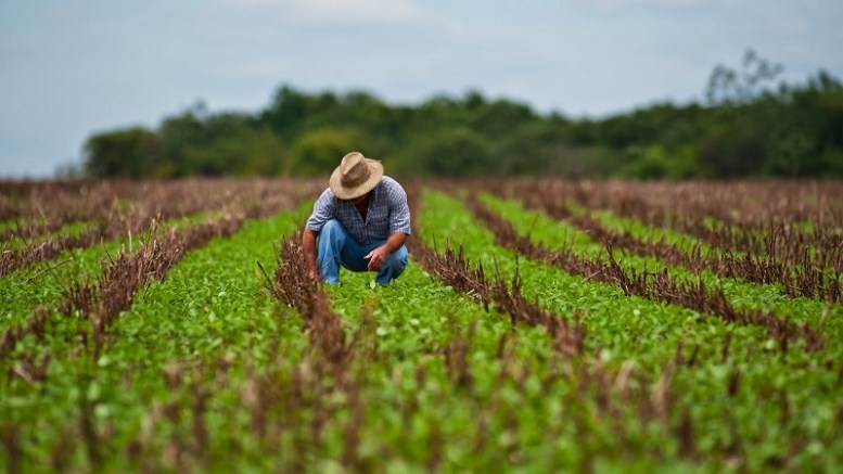 Venezuela podría autosustentar su agricultura en 7 años - Venezuela podría autosustentar su agricultura en 7 años