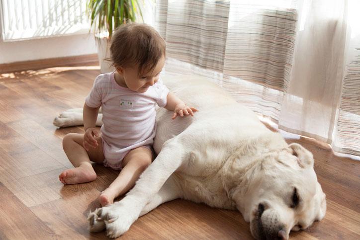 pet prep for new baby pediatric associates of Savannah