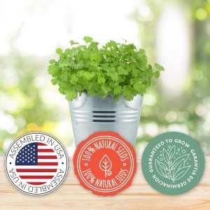 Chef Grow Kit | Cilantro | Organic
