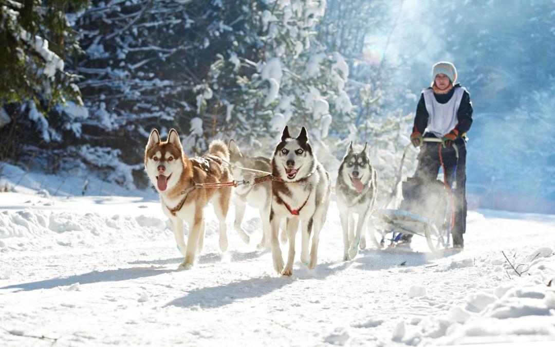 Besondere Erlebnisse in der winterlichen NaturSüdtirols
