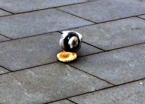 Bagel Bird
