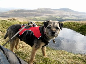 """I is beautiful mountain dog."""