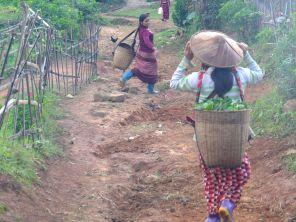 Coming back from tea plantations (Pankam village)