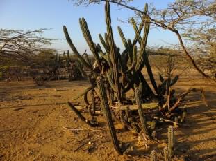 Cactus, all around...