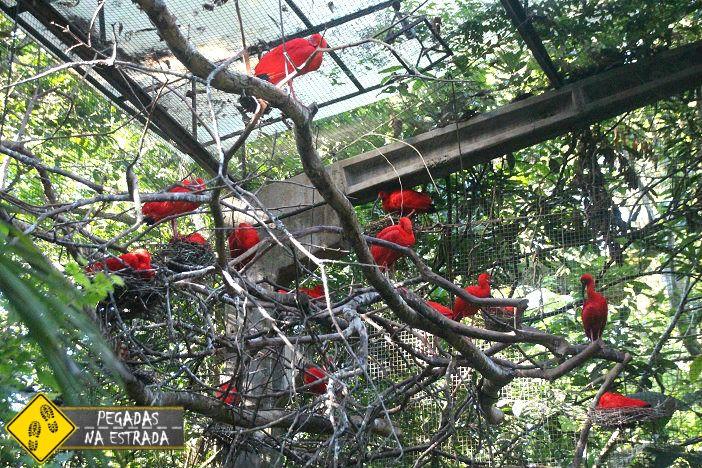Resultado de imagem para papagaio australiano cheio de penas