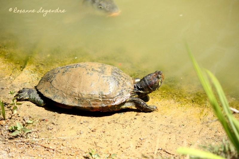 Tortue au Parc Zoologique de Thoiry | Photographer : Roxanne Legendre