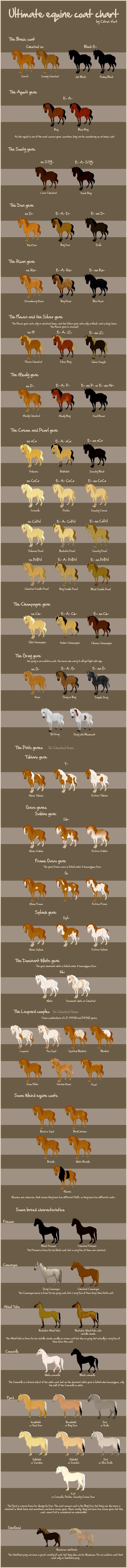 www.pegasebuzz.com | Les robes du cheval en anglais