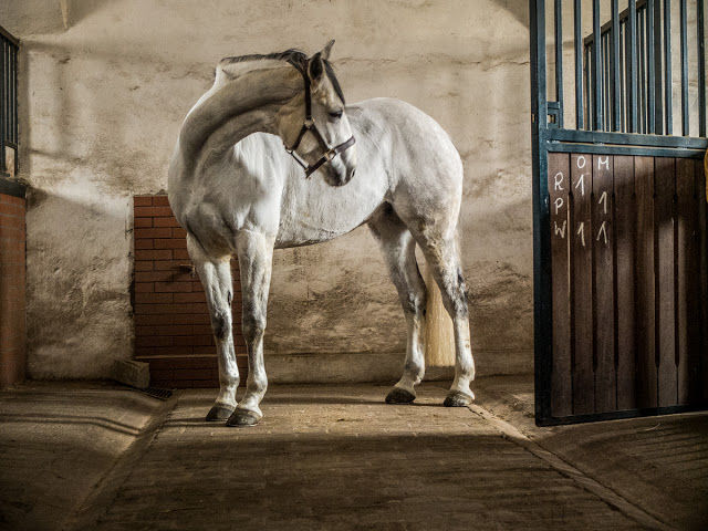 Bagienec Stables by Portsmouth Photography