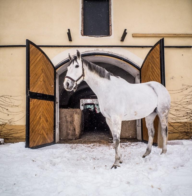 bagienec-stables-09