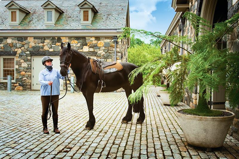 www.pegasebuzz.com | Martha Stewart's stables