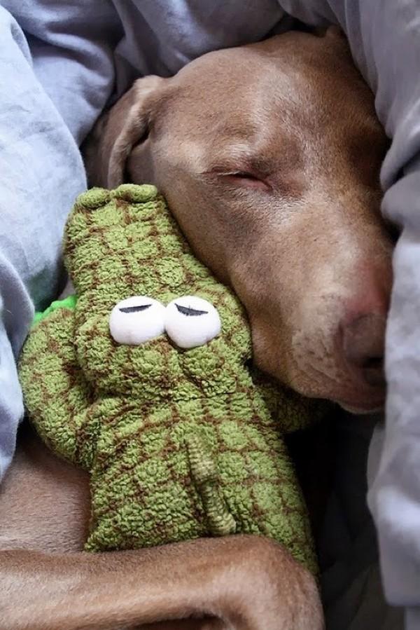 www.pegasebuzz.com | Dog and Teddy Bear