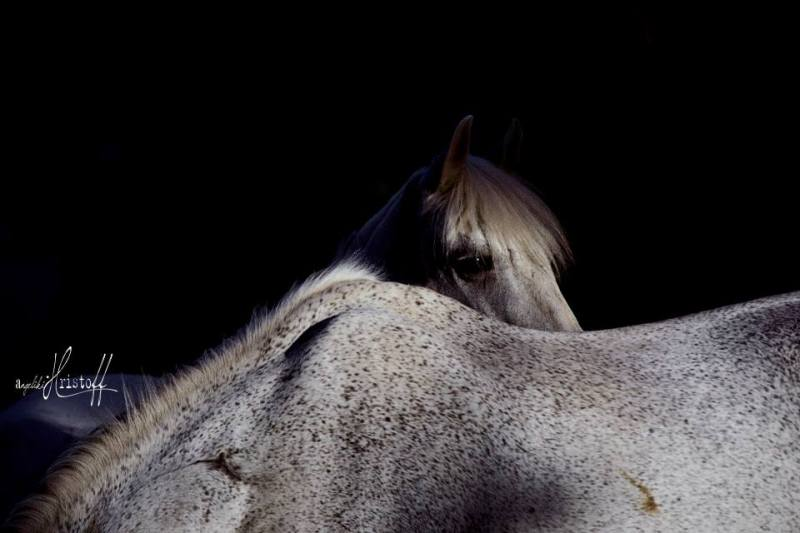 www.pegasebuzz.com | Equine photography : Angeliki Hristoff - The horse in the box