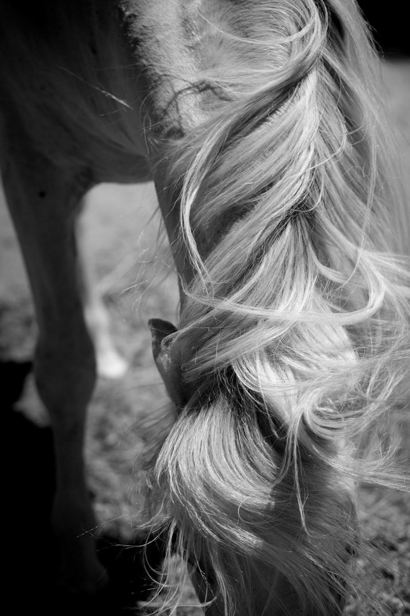 www.pegasebuzz.com | Equestrian photography : Jessica Arneback - Andalousian horse