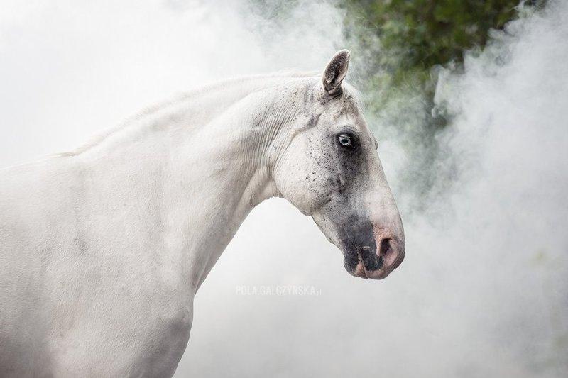 www.pegasebuzz.com   Equestrian photography : Pola Gałczyńska