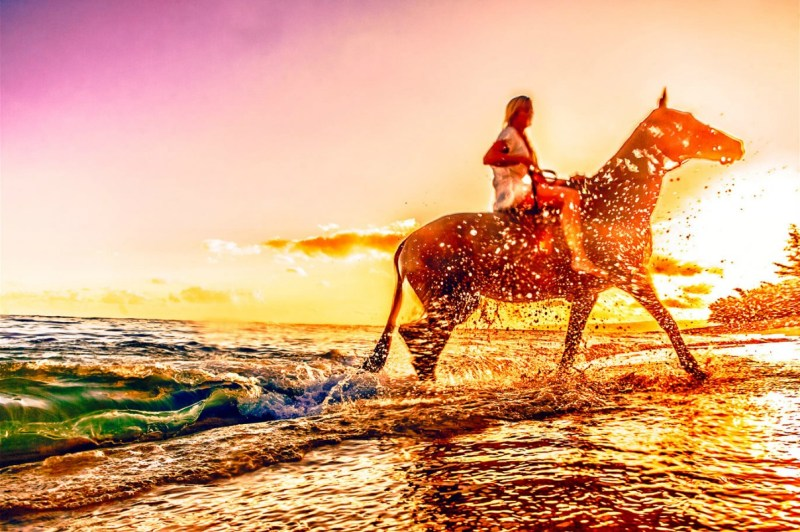 www.pegasebuzz.com | C.J. DeWolf : Horses in Hawaï