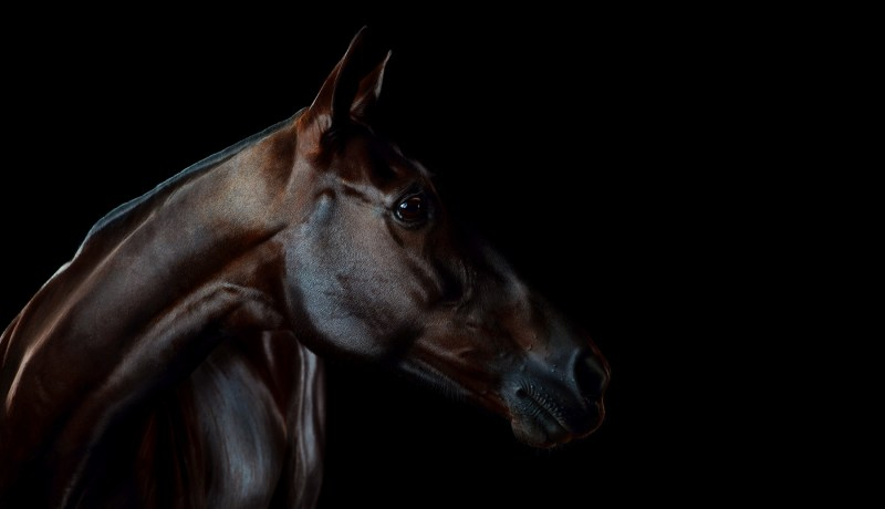 www.pegasebuzz.com | Equestrian photography : Ramon Casares Fine Art.