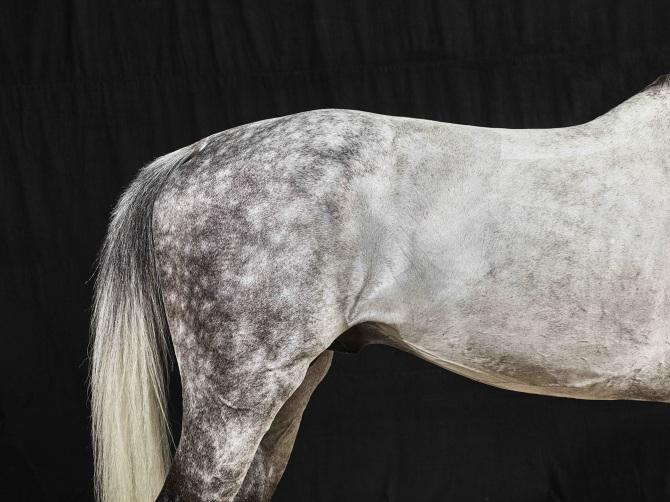 www.pegasebuzz.com | Equestrian photography : Juan Lamarca - horse series