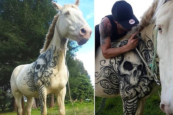 www.pegasebuzz.com | Equestrian lifestyle : Benjamin Lloyd tattooing a horse