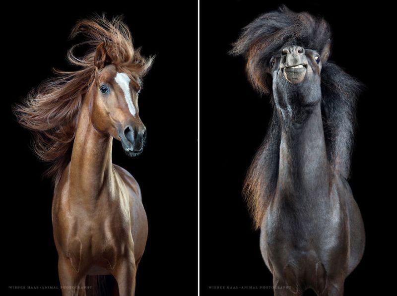 www.pegasebuzz.com | Equestrian photography : Wiebke Haas - Horsestyle