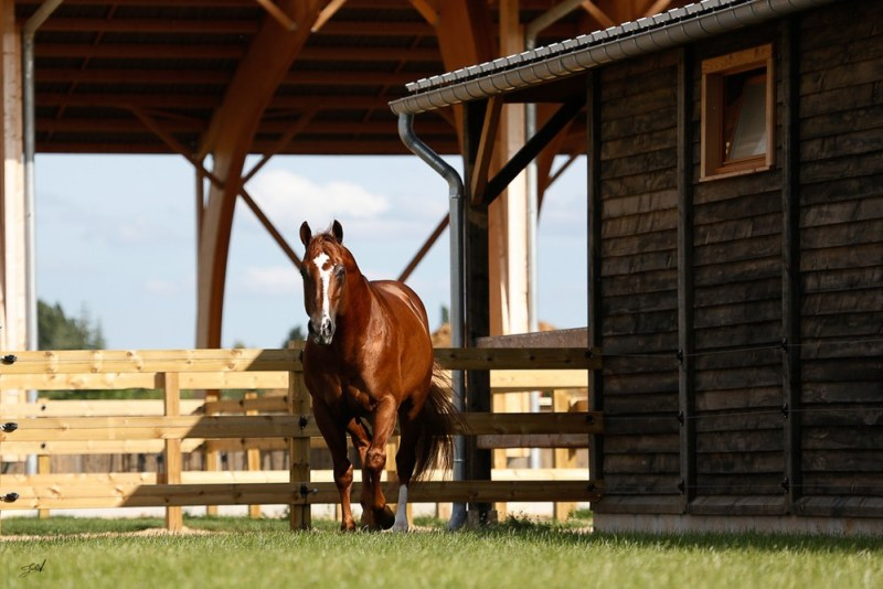 www.pegasebuzz.com | Equimov présente Bo Ranch, le pôle international du western en France