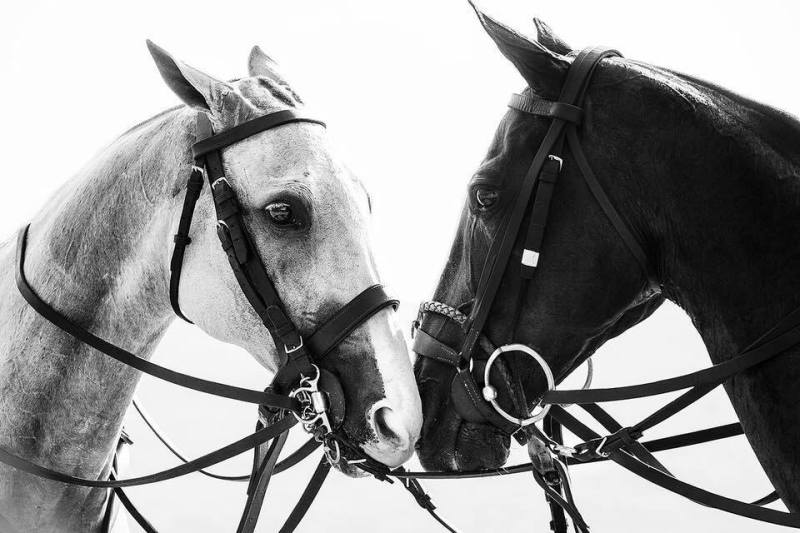 www.pegasebuzz.com   Equestrian photography : Irina Kazaridi - Polo Ponies.