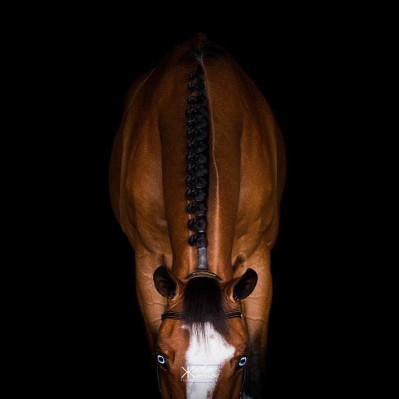 www.pegasebuzz.com | Equestrian photography : Kaytlyn Karssen.