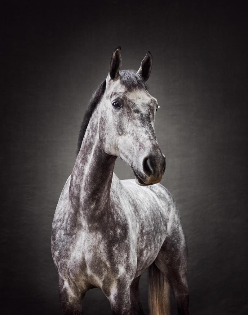 www.pegasebuzz.com | Equestrian photography : Alexander Crispin for Krafft.