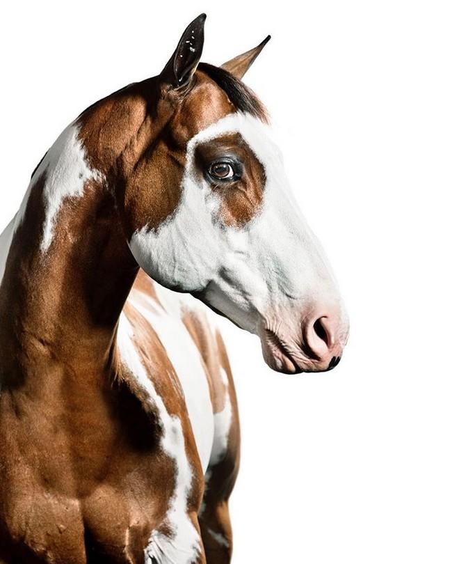 www.pegasebuzz.com | Equestrian photography : Shelly Breidenbach.