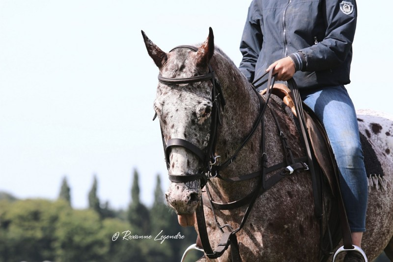 www.pegasebuzz.com | Equestrian photography : Roxanne Legendre at Polo Club du Domaine de Chantilly.