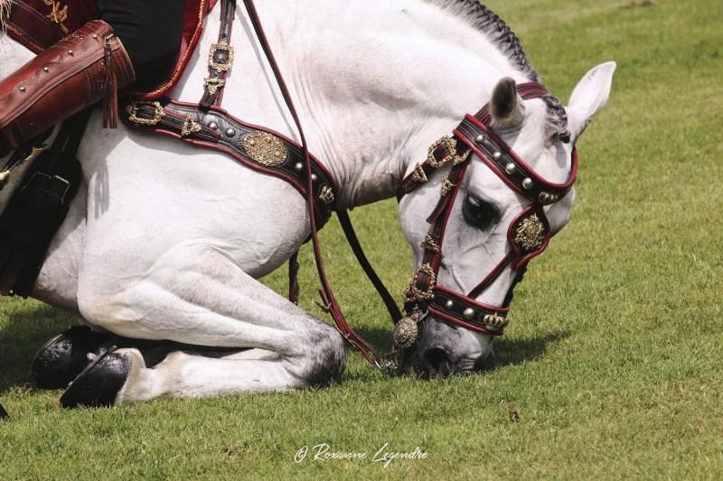 www.pegasebuzz.com | Equestrian photography : Roxanne Legendre at Polo Club du Domaine de Chantilly.