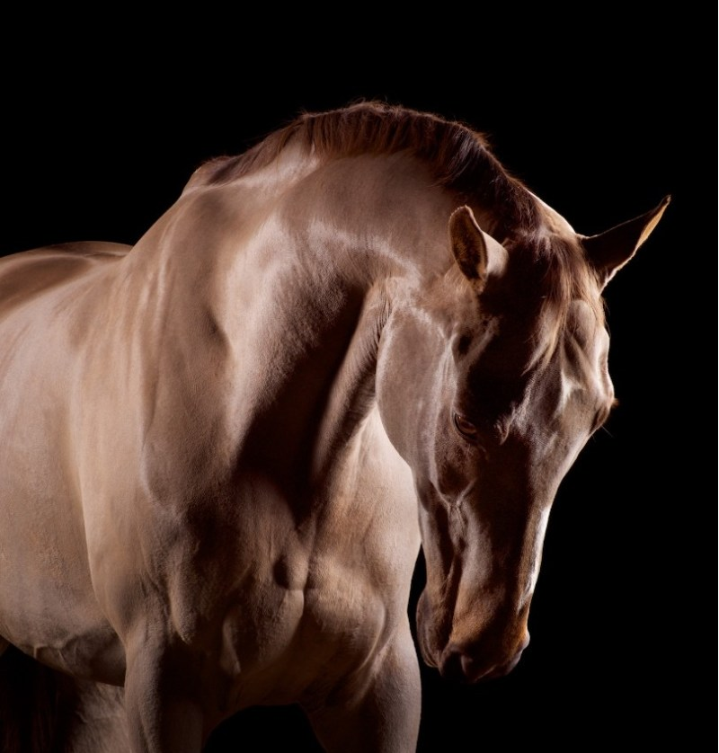 www.pegasebuzz.com | Equestrian photography : Mark Harvey - Horses.