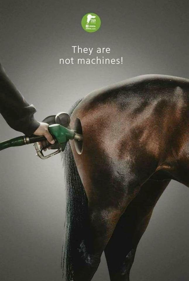 www.pegasebuzz.com | Association vegan 269 Life : horses are not machines