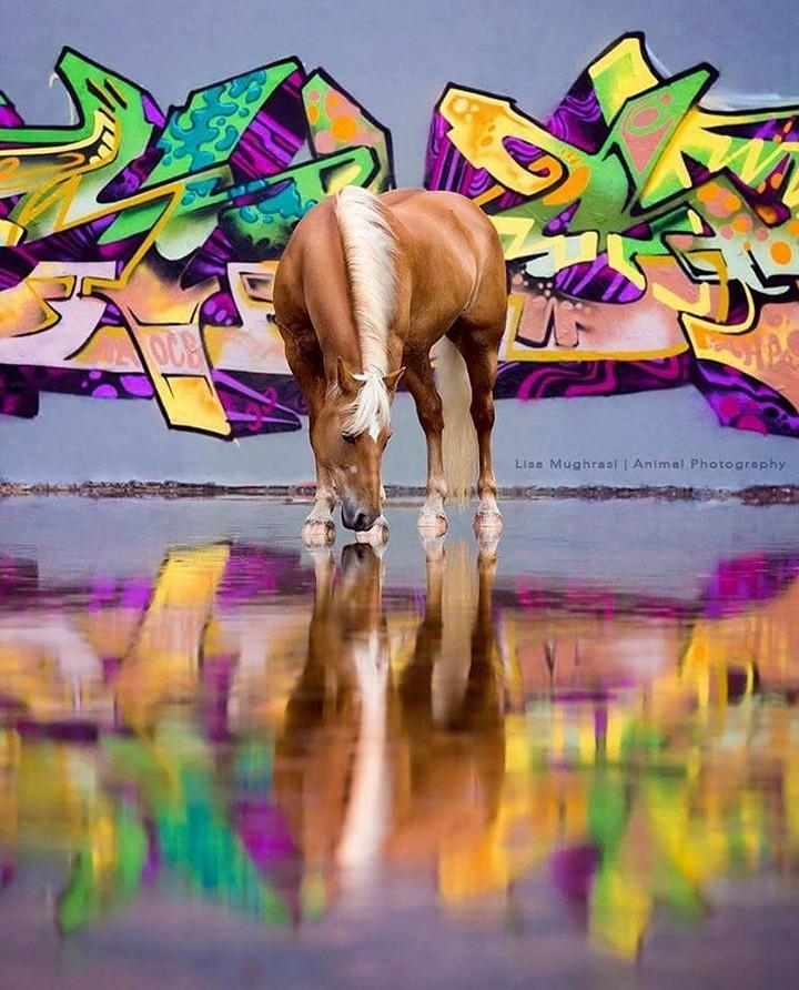 www.pegasebuzz.com   Equestrian photography : Lisa Mughrasi - Horse Graffiti.