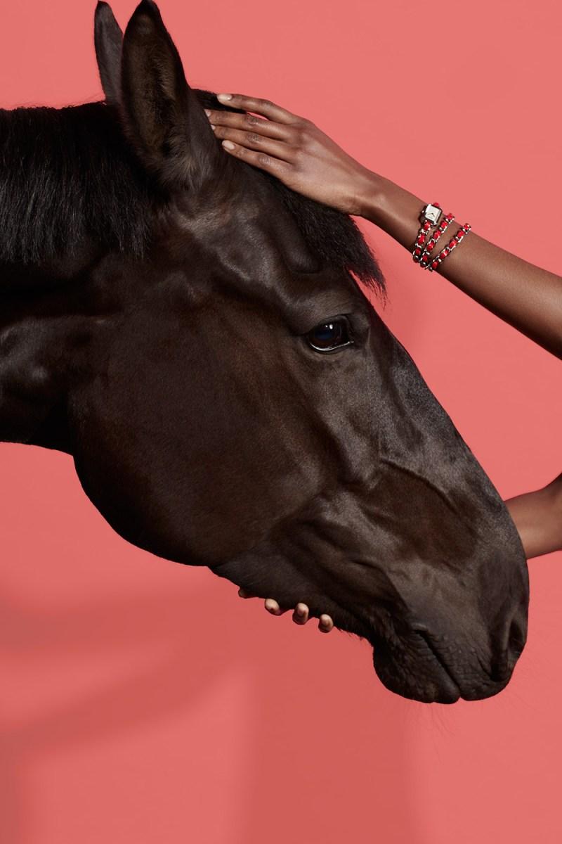 www.pegasebuzz.com | Equestrian photography : Marcus Gaab - Style Horse.