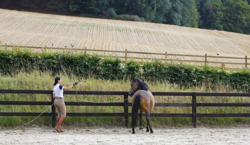 www.pegasebuzz.com | The Tack Room, la formation en ligne des propriétaires de chevaux : gestion naturelle du cheval, bien-être et performance.
